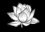 línea-hermosa-de-la-flor-del-vector-del-lirio-de-agua-de-lotus-t-blanco-y-negro-92127719